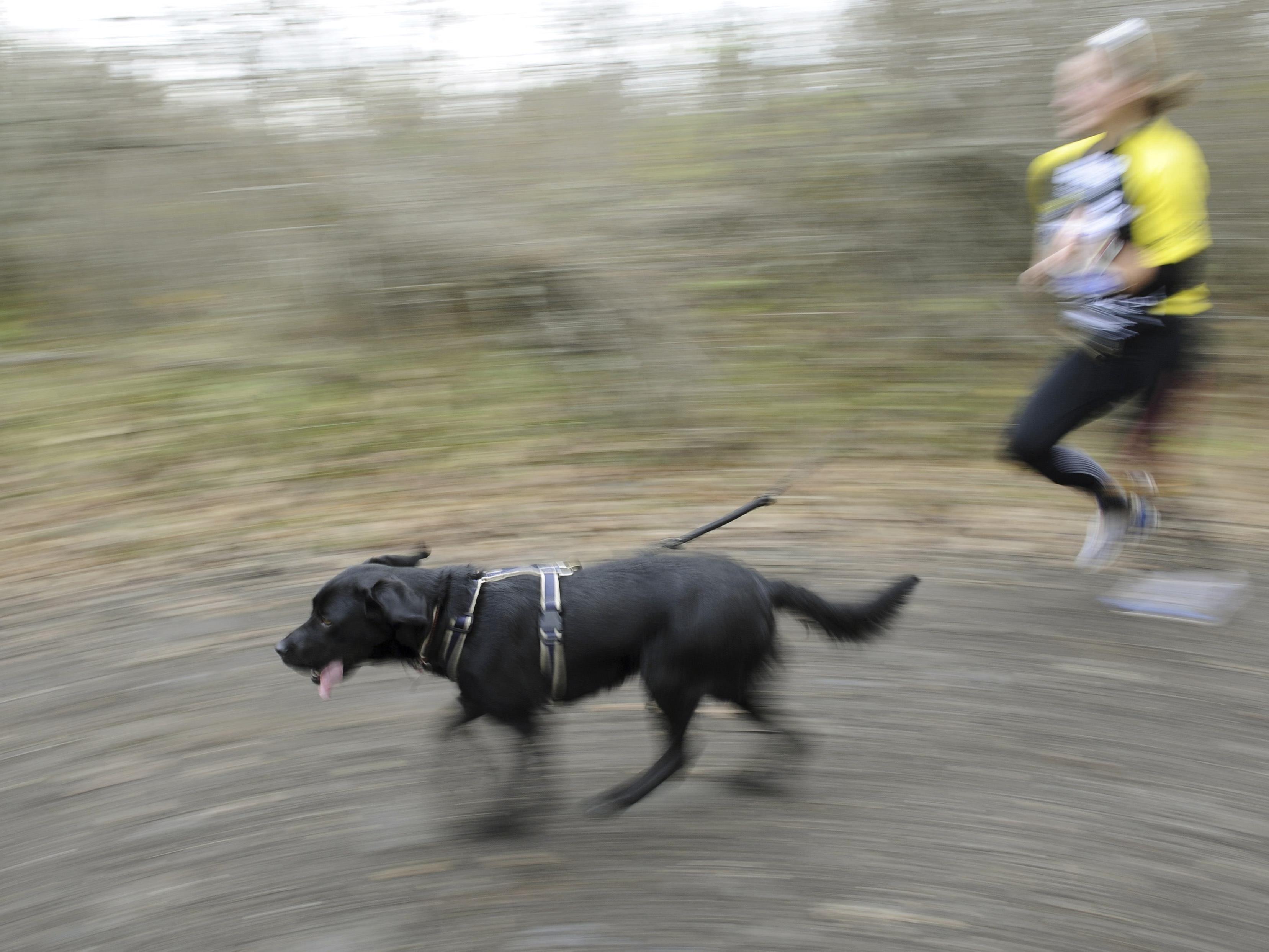 Läufer und Hundehalter zur Hälfte schuld – Sportler hätte besser aufpassen müssen.