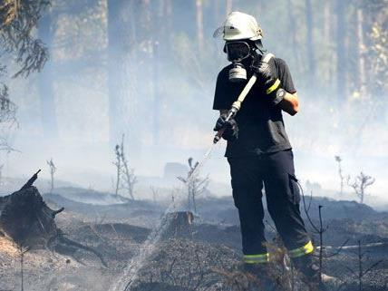 Waldbrand in Wiener Neustadt