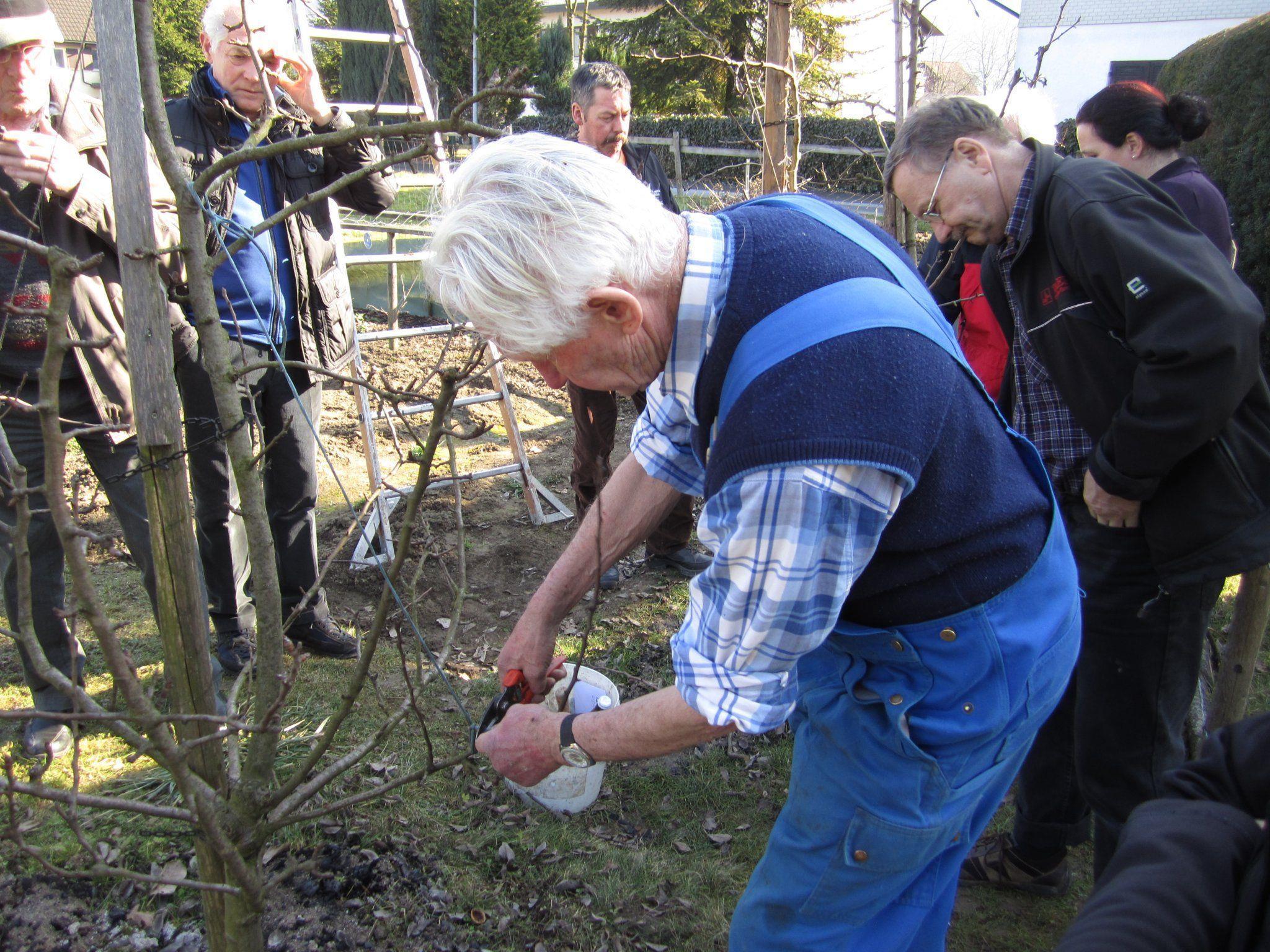 Wie man Bäume richtig schneidet, zeigte Baumwärter Ernst Schmoranz beim Baumschnittkurs