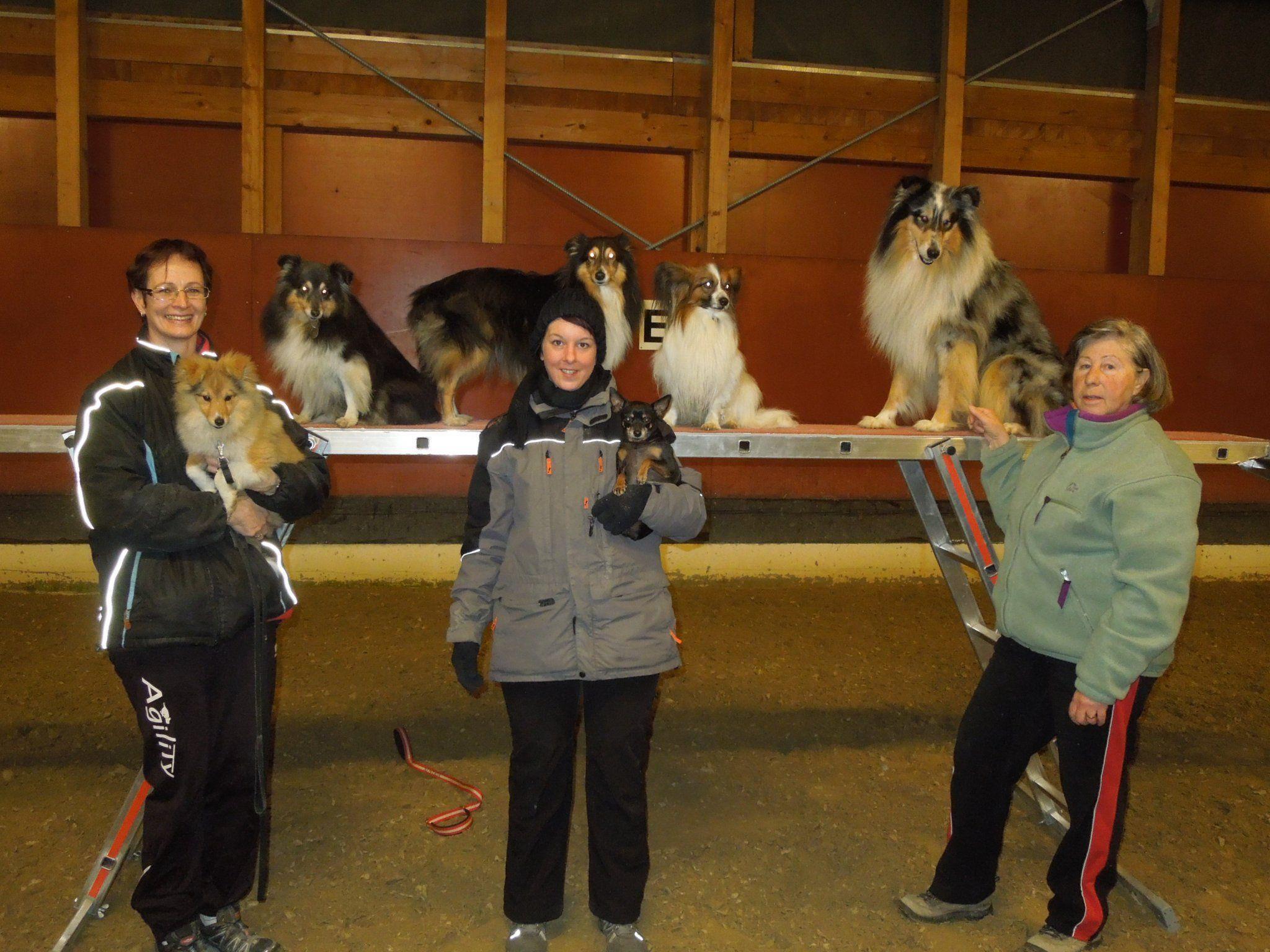 Im Winter treffen sich die ÖGV Hundesportfreunde einmal wöchentlich in der Halle zum Training.