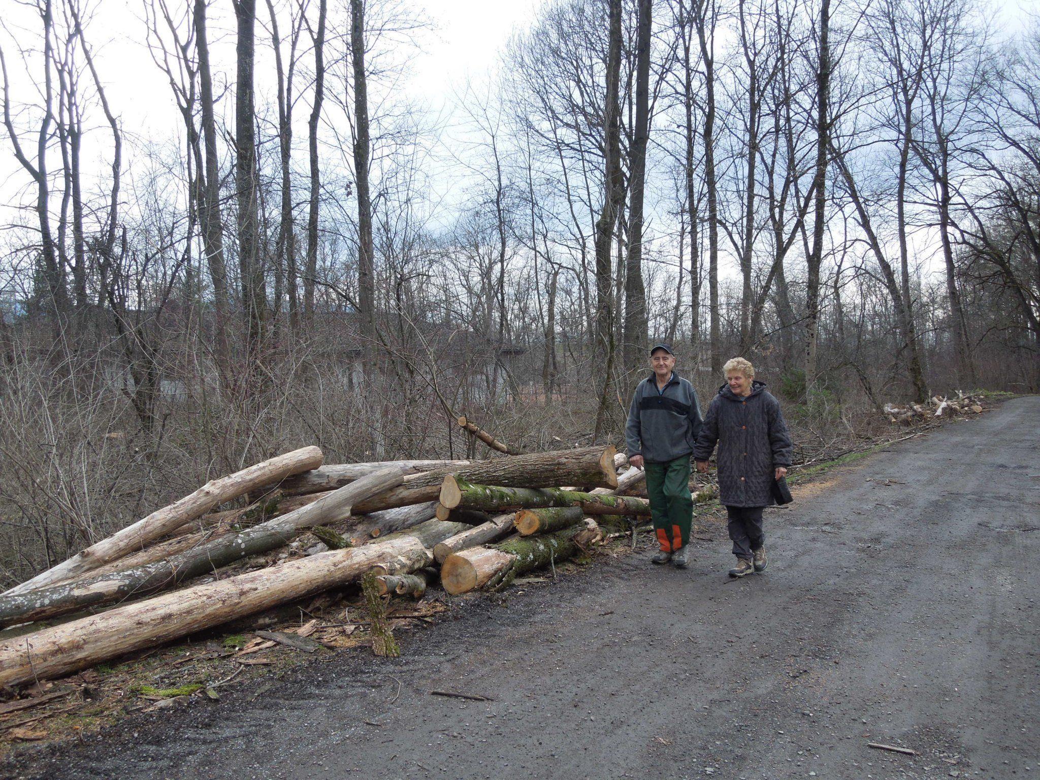 Die Idee, die abgeholzten Bäume durch neue Nussbäume zu ersetzen, stößt im BF auf großen Anklang.