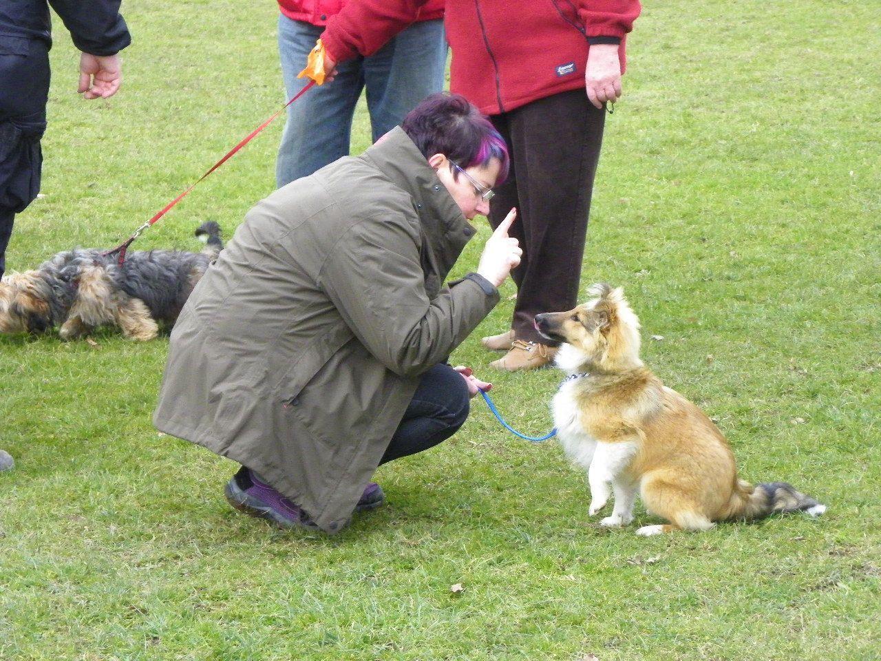 Hundeerziehung leicht gemacht