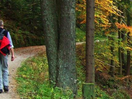 In Kärnten stürzte ein Pensionist 25 Meter in eine Böschung