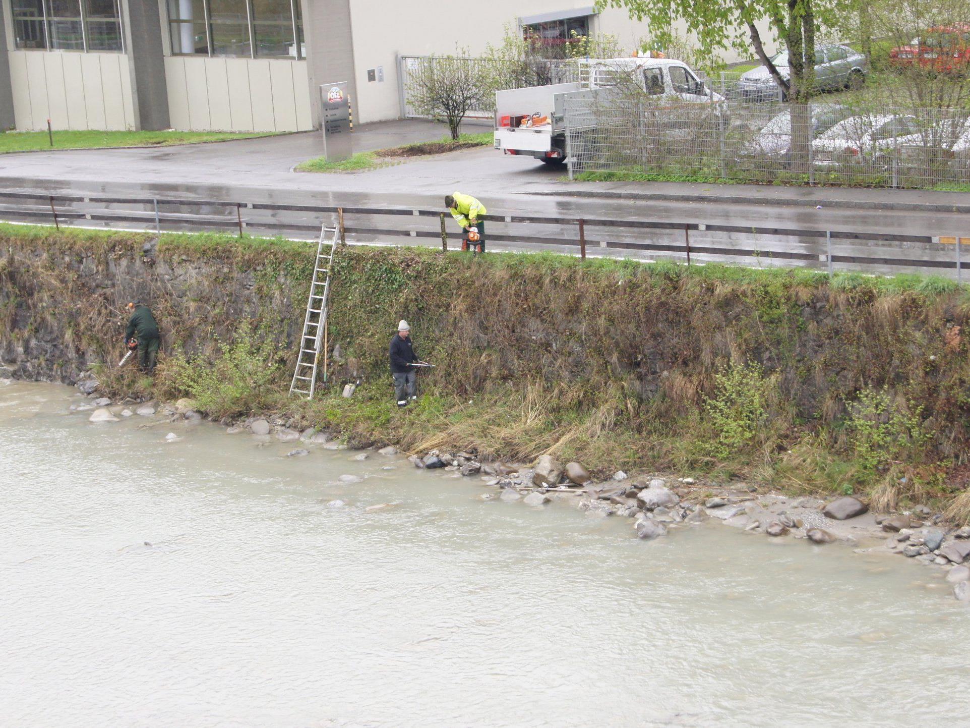 Uferreinigung an der Dornbirner Ache im Bereich der Achstraße.