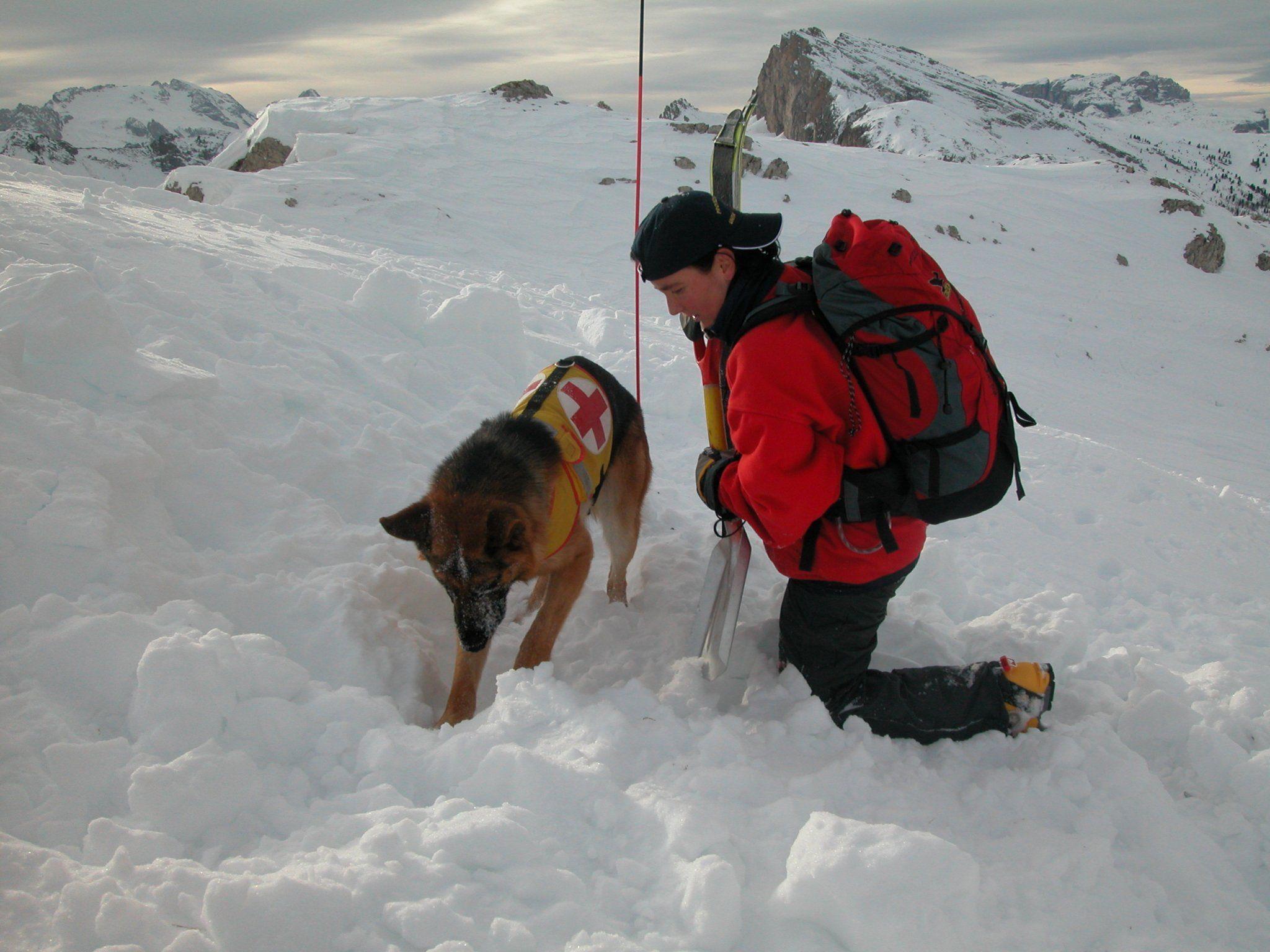 Die Rettungshunde haben unzähligen Lawinenopfern das Leben gerettet.