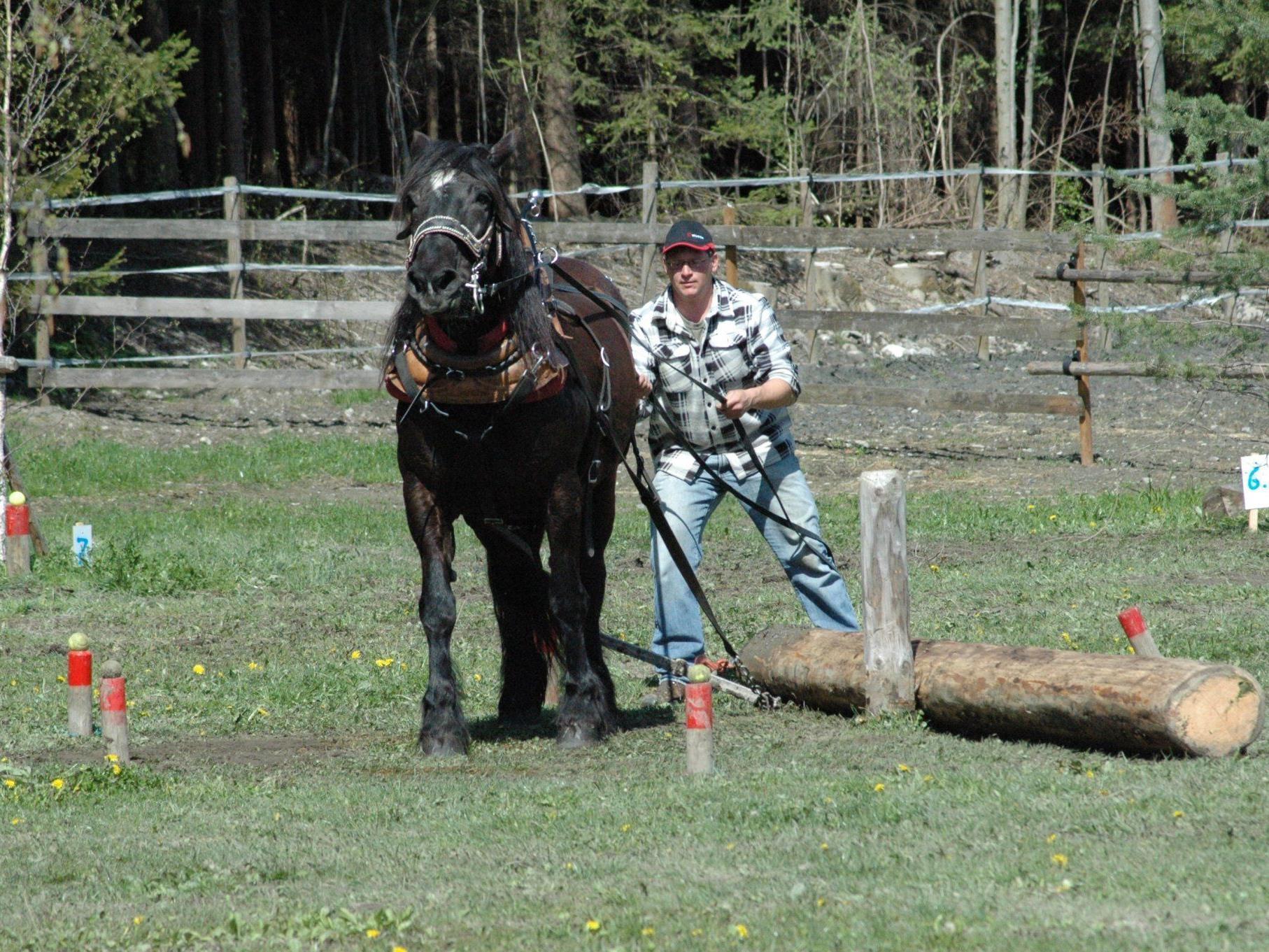 Mensch und Pferd leisteten beim Holzrücken ganze Arbeit.