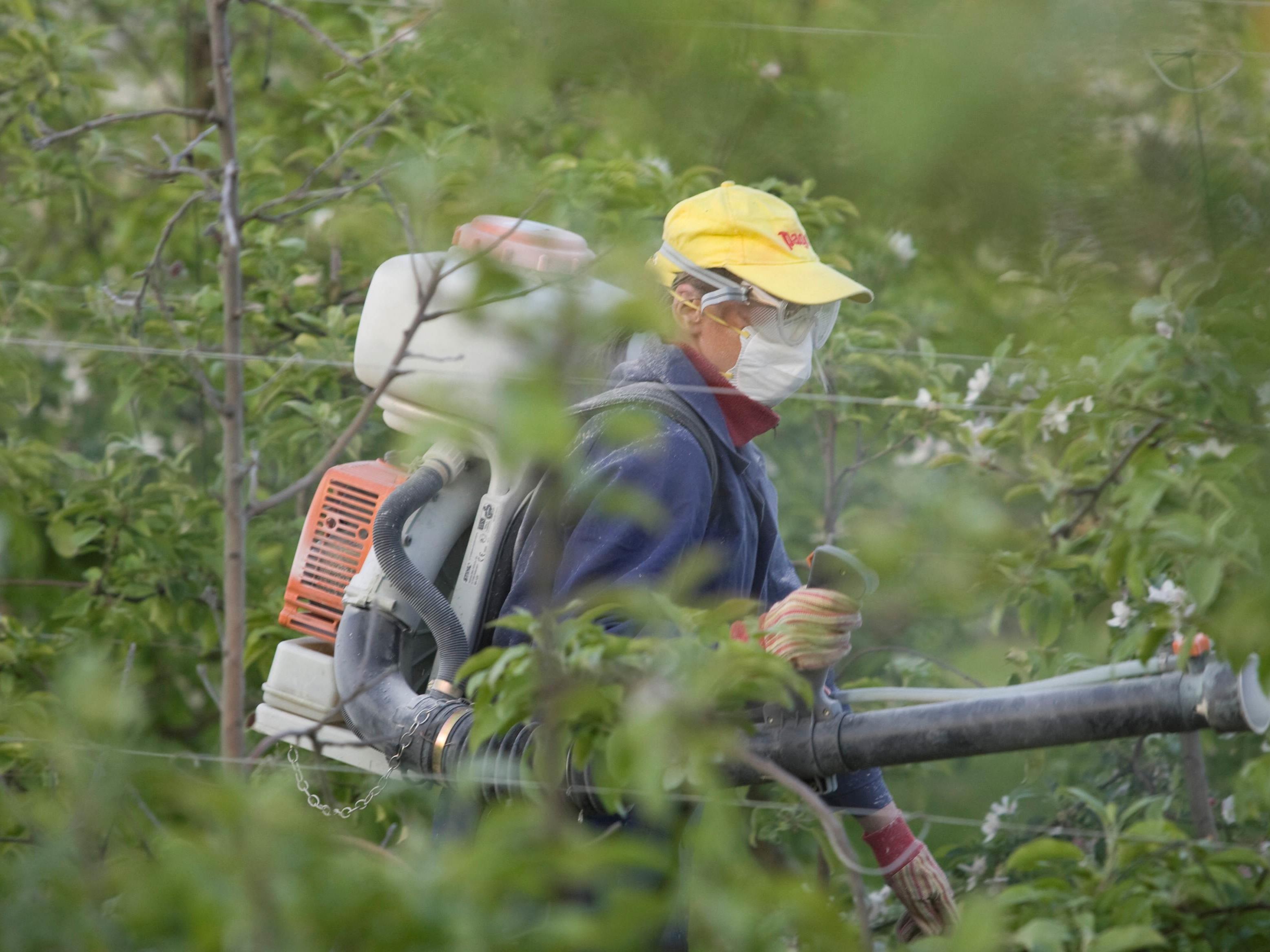 Feuerbrand: Auch dieses Jahr droht wieder große Gefahr von der gefürchteten Pflanzenseuche.