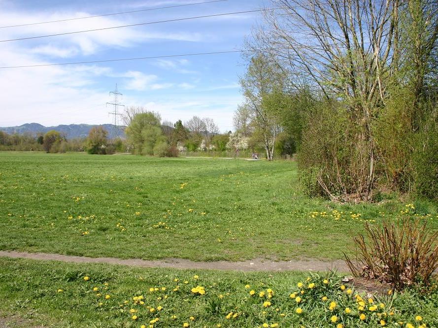 Hochwasserrückhaltebecken im Bereich Rheinauen – hier ist ein Damm zu den Steuerelementen geplant.
