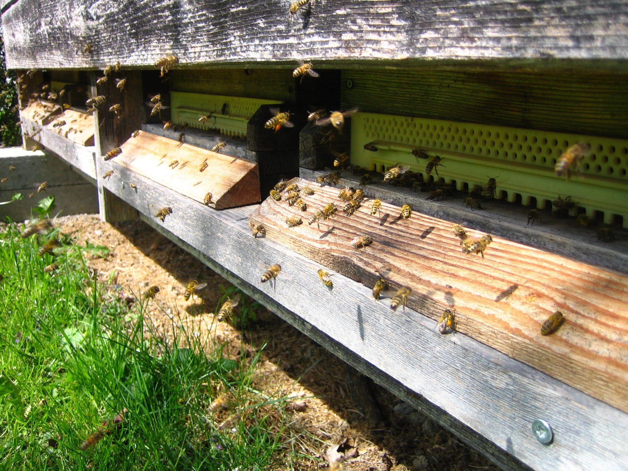 Unsere Bienen brauchen Hilfe!