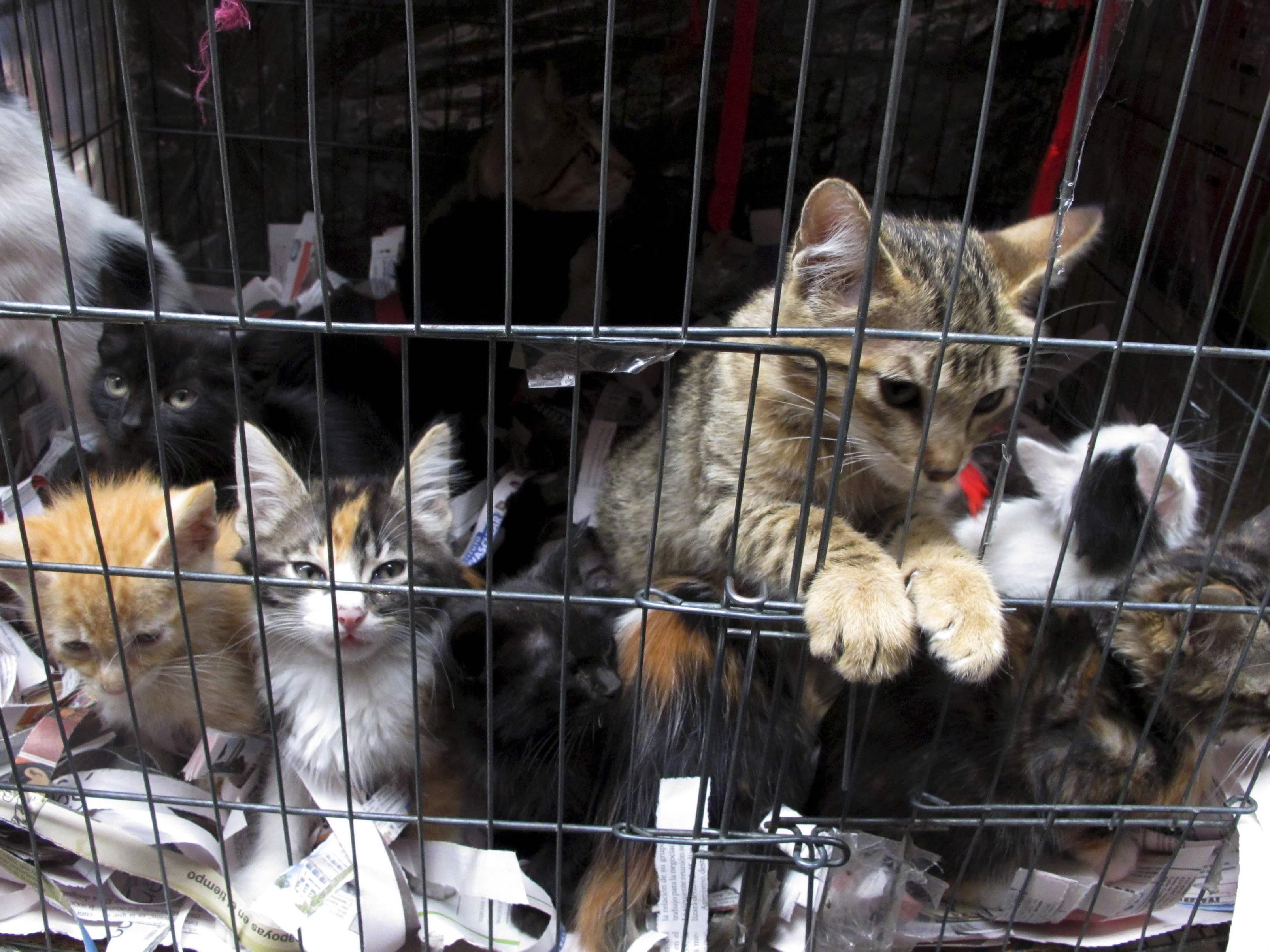 Eine Katzenfelldecke wollte der Mäderer verkaufen. Er fing keine Katzen.