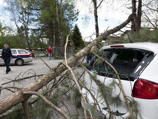 Ein Pkw wurde von dem umstürzenden Baum beschädigt.