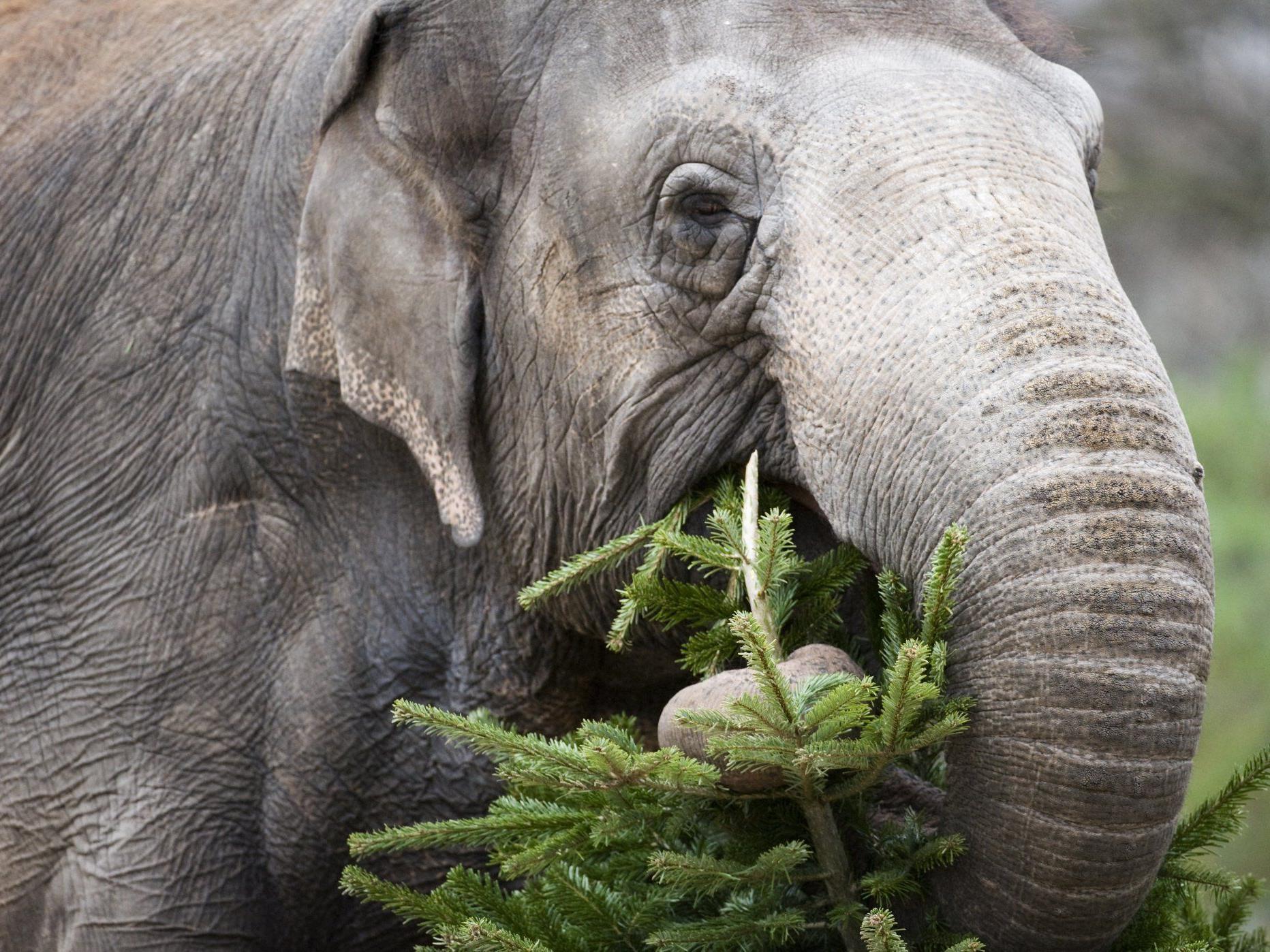 Ein Elefant sorgte in Lindau für einiges Aufsehen.