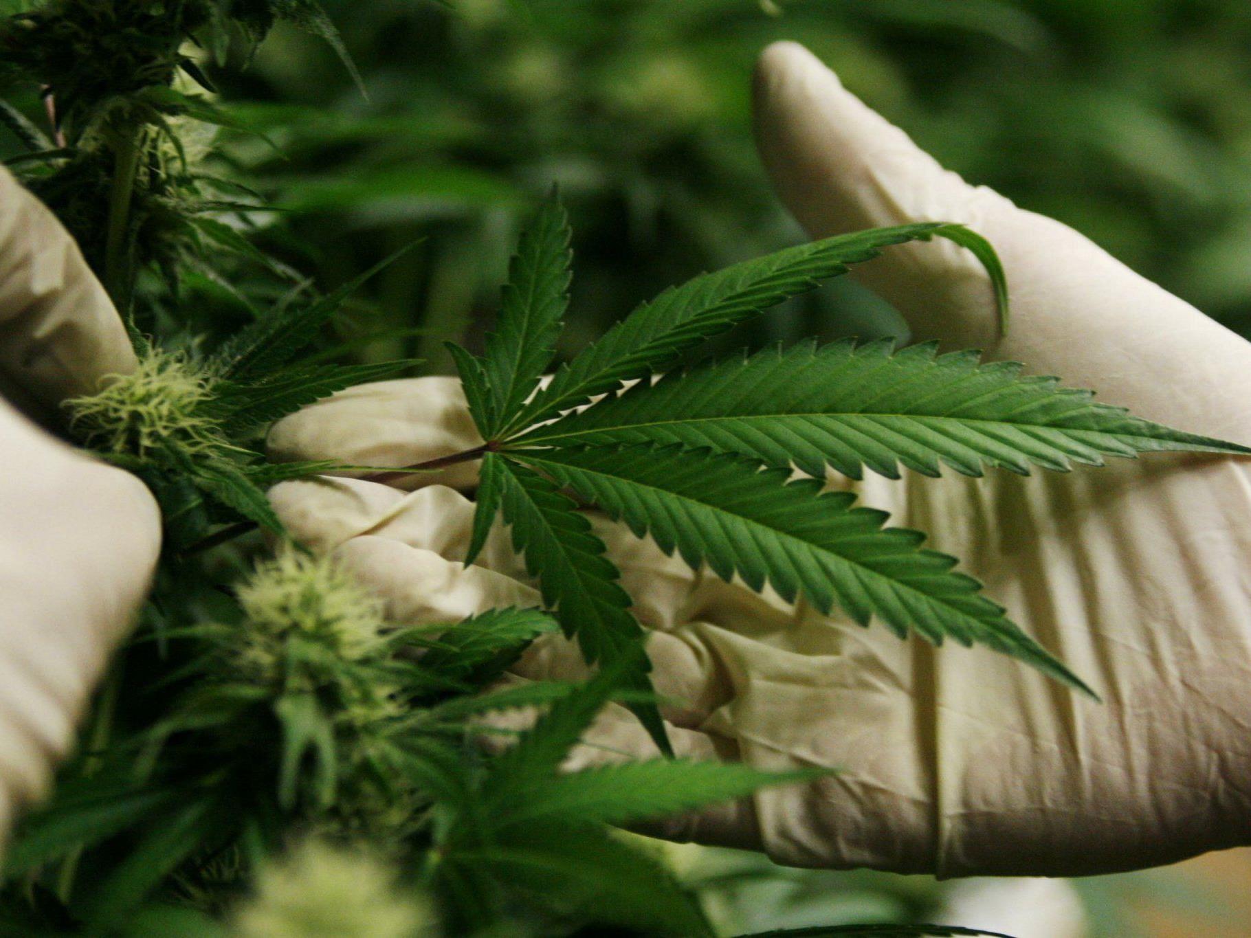 Die beschlagnahmten Drogen haben einen Wert von rund 660 Millionen Euro.