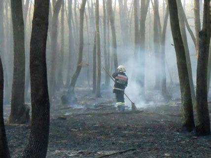 Die genaue Brandursache für das Waldfeuer im Burgenland ist noch unklar, die Polizei ermittelt.