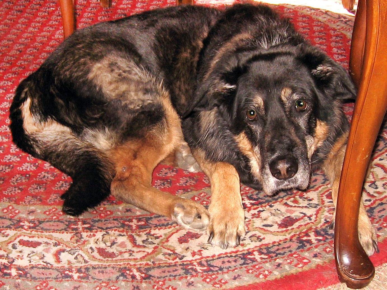 Das Urteil zur Tierhaltung gilt nicht automatisch für Hunde.