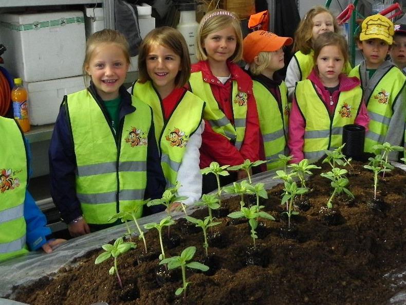 Alle Kinder durften eine Sonnenblume mit nach Hause bringen