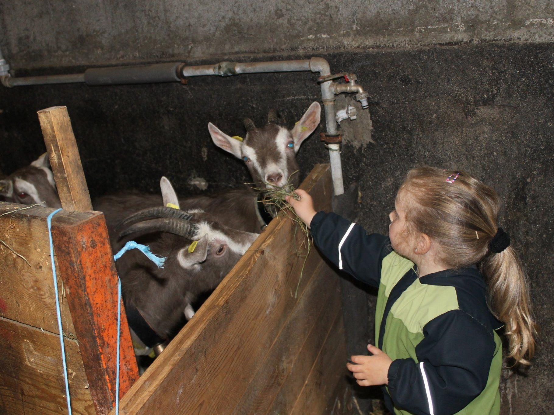 Alina füttert mit Begeisterung die Ziegen