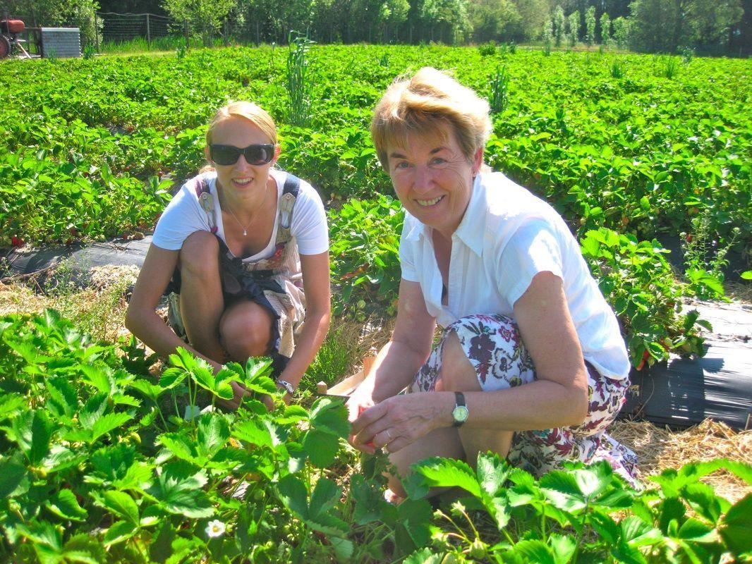 Belinda und Roswitha legten selbst Hand an geschmackvollen Erdbeeren an