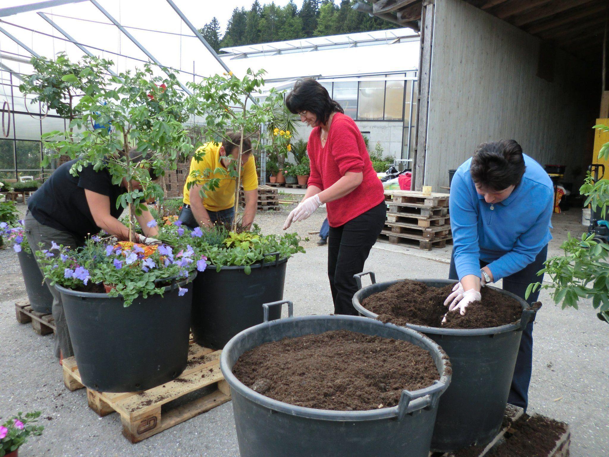 Bepflanzung der Blumentöpfe