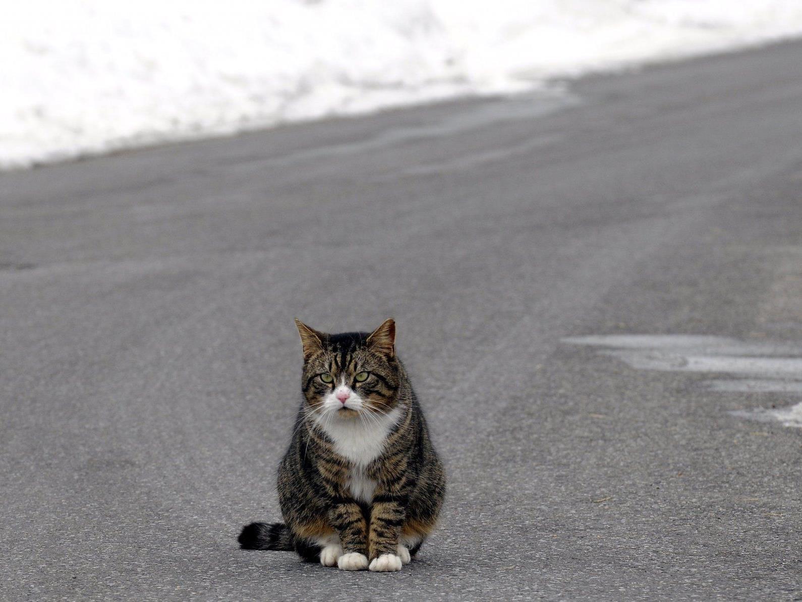 Katze dreimal von Polizei überfahren.