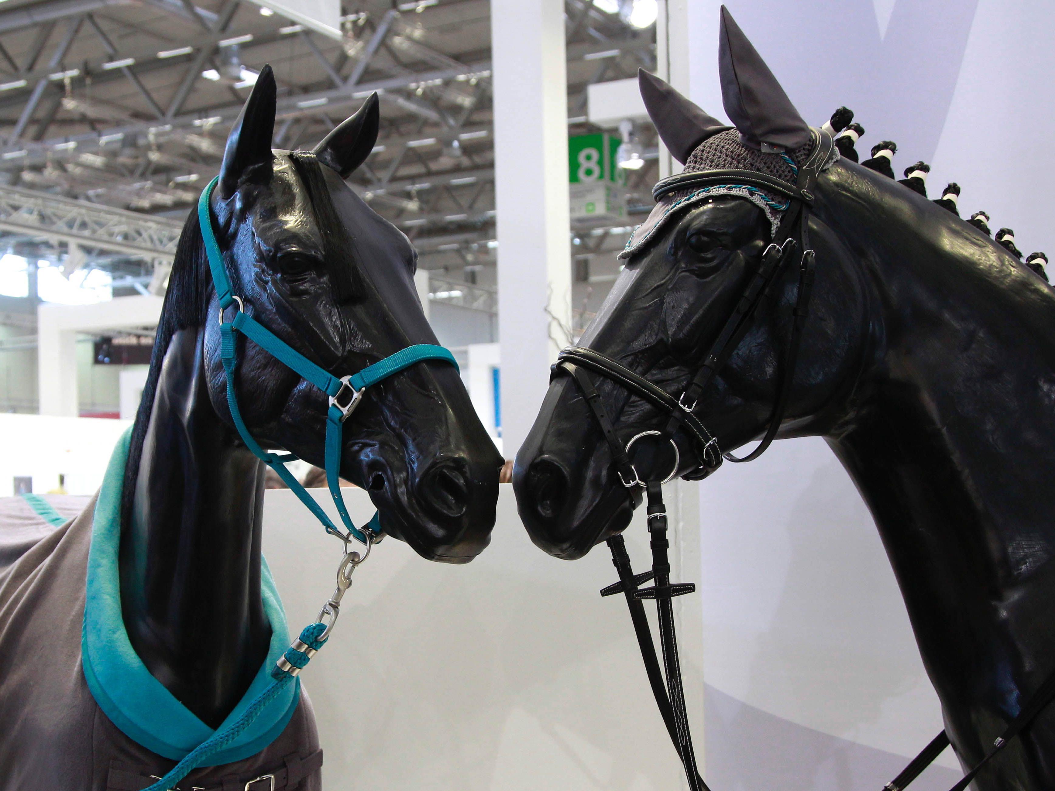 Pferde verknüpfen Sehen und Hören