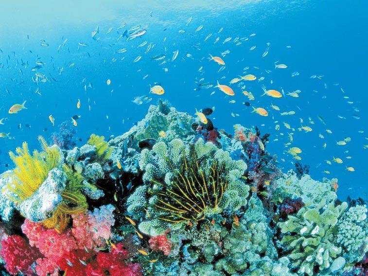 Das Riff an der Ningaloo Coast in West-Australien ist eines der größten Saumriffe der Erde