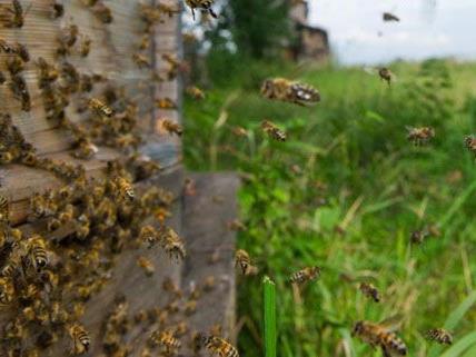 Die Bienen hatte bei dem Brand nichts zu lachen.
