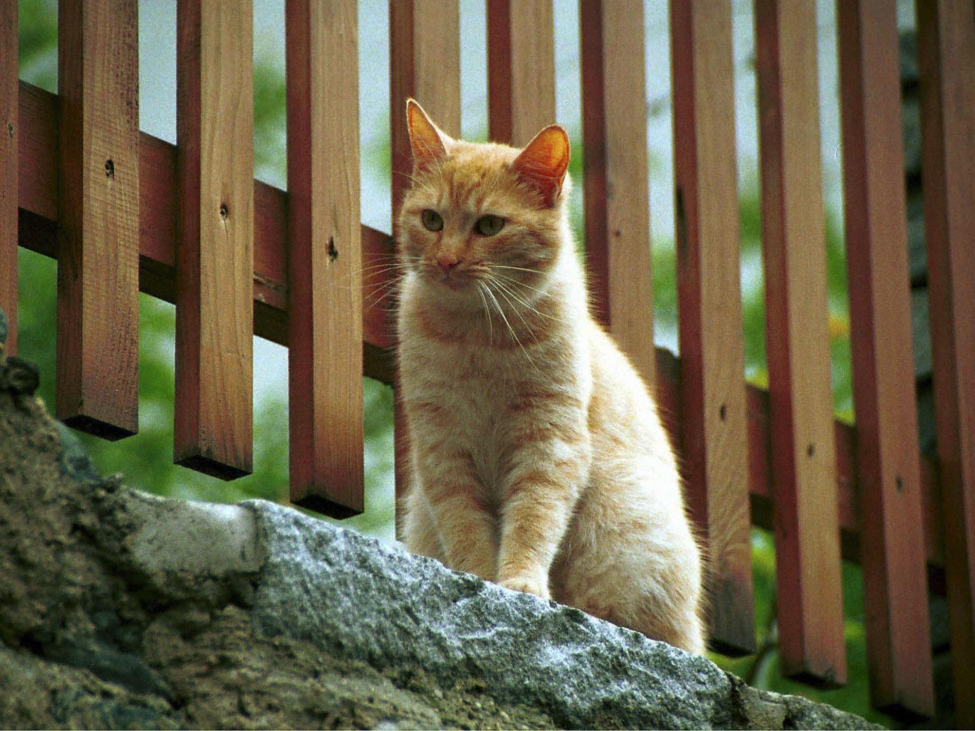 Katze nach vier Tagen befreit (Symbolbild).