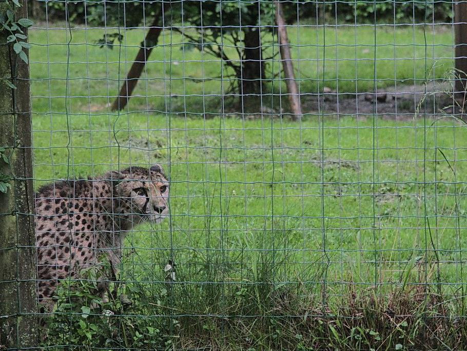 Tierschützer kritisieren die artgerechte Haltung von Zootieren.