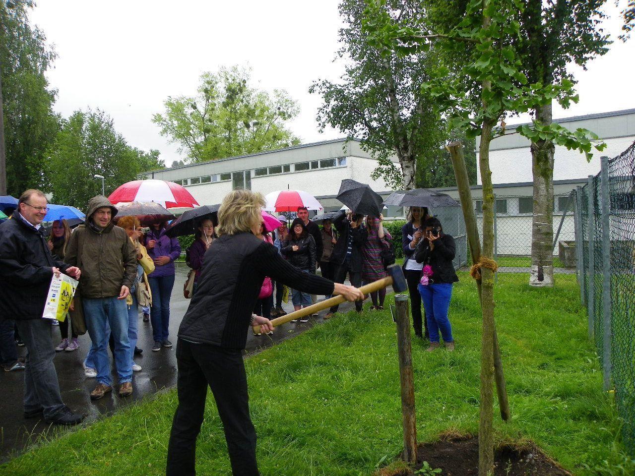 Ginko Baum als Zeichen für Nachhaltigkeit wurde gepflanzt