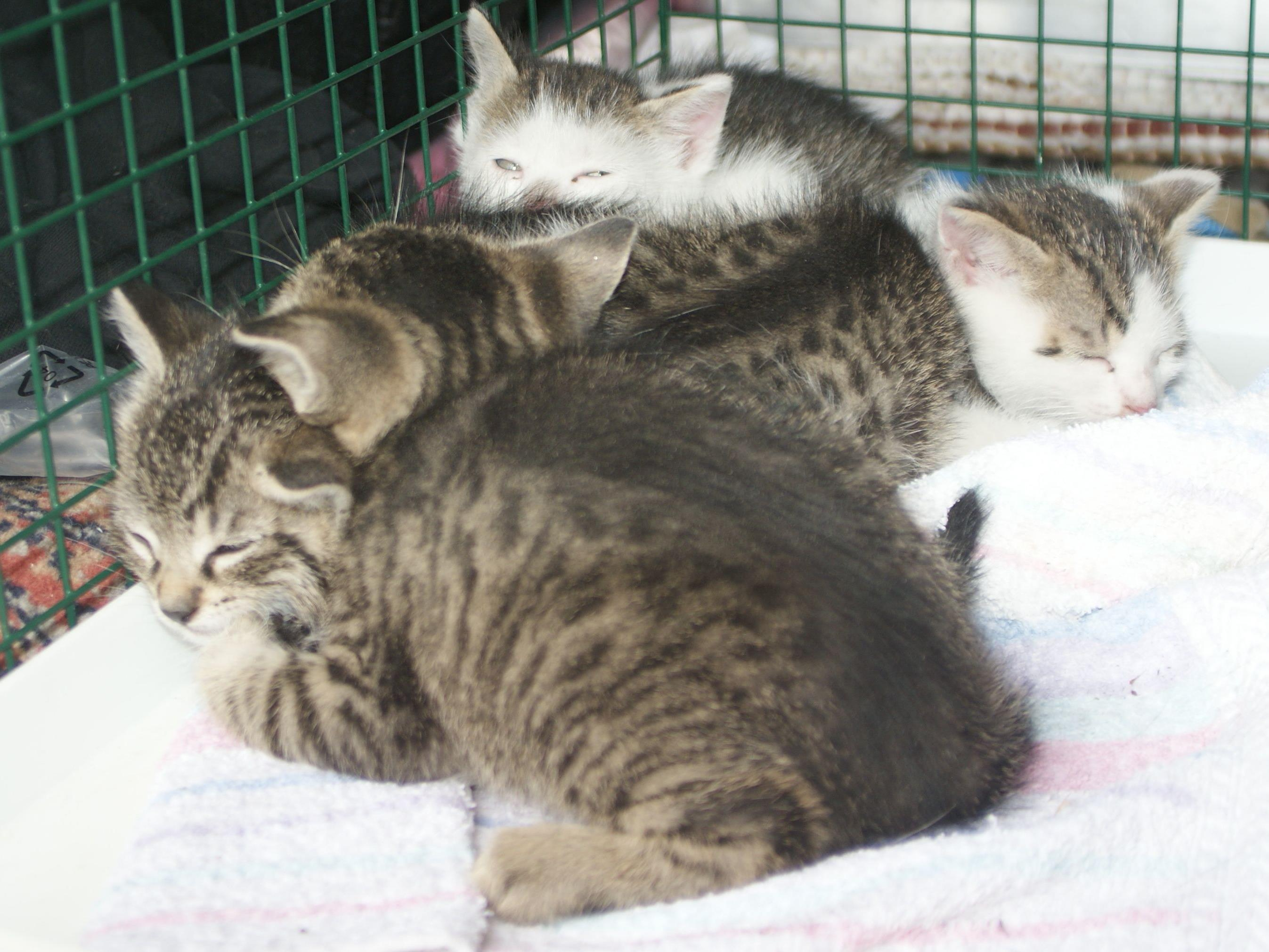 Diese vier Kätzchen wurden am Gelände der Enstorgungsfirma ausgesetzt.