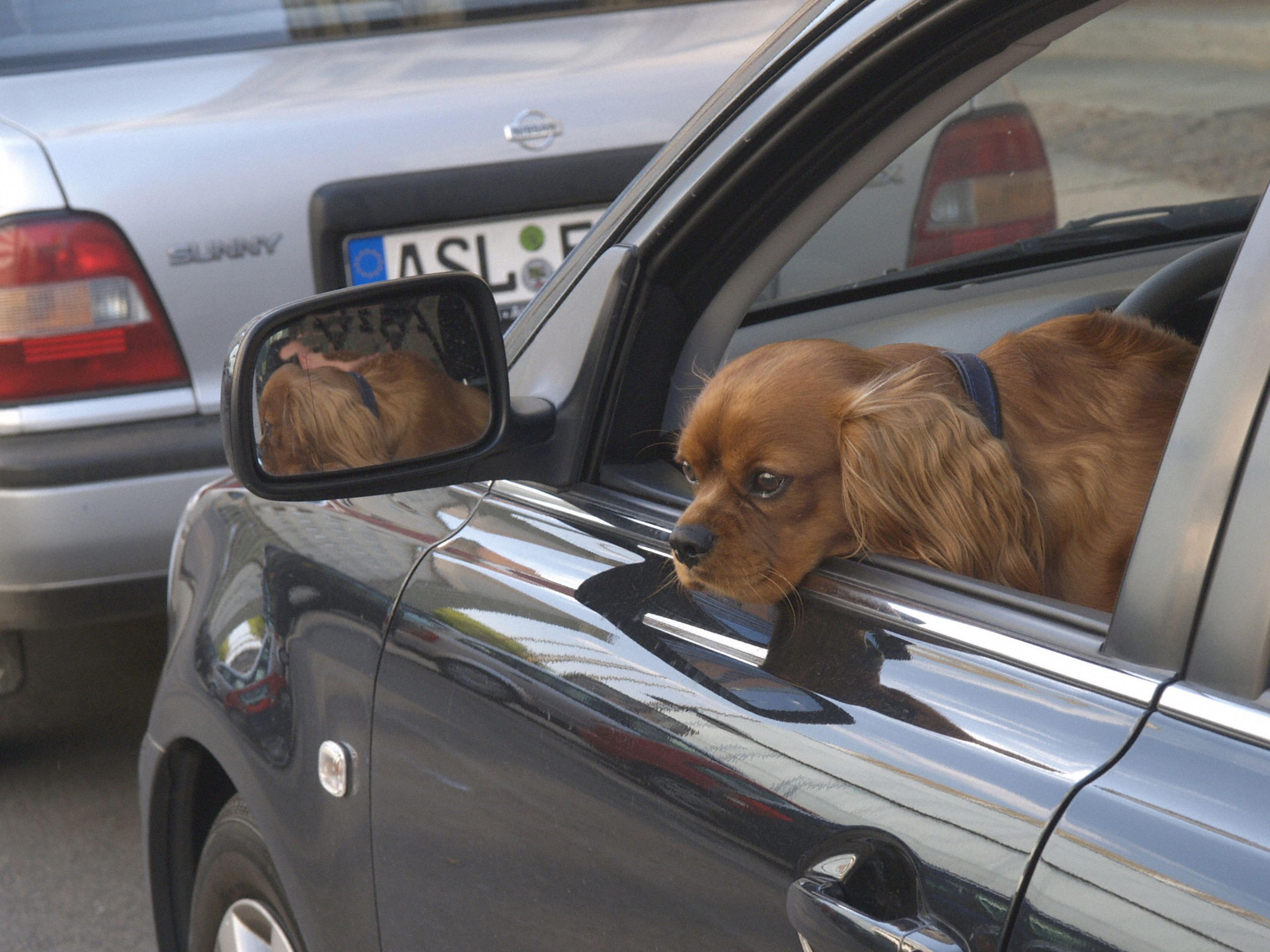 Hunde und Kinder haben in der Hitzewelle allein nichts im Auto verloren.