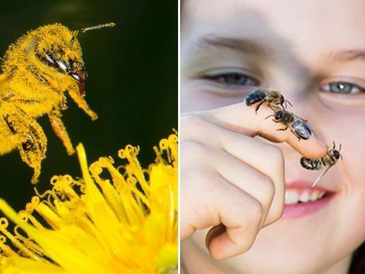 Auf den Spuren faszinierender Tiere im neuen Bienenhaus im Tiergarten Schönbrunn