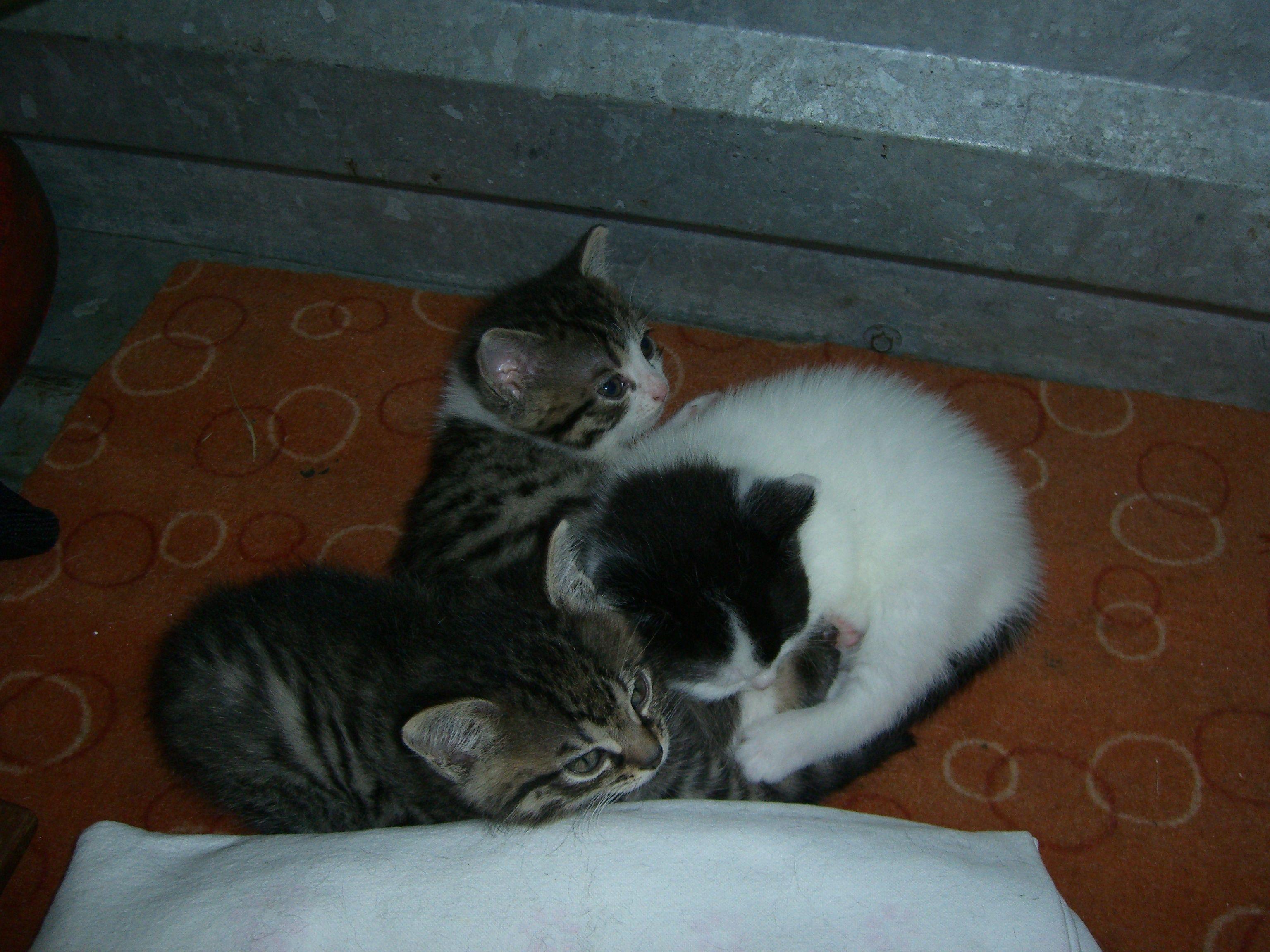 Katzenbabys suchen ein Zuhause.