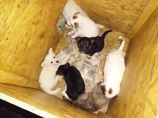 In diesen kleinen Kisten waren die Hundebabys untergebracht