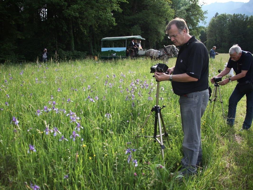 Was die Filmfreunde faszinierte, waren besonders die Sibirischen Schwertlilien (Iris), welche die Wiesen in ein leuchtend blaues Blütenmeer verwandelten