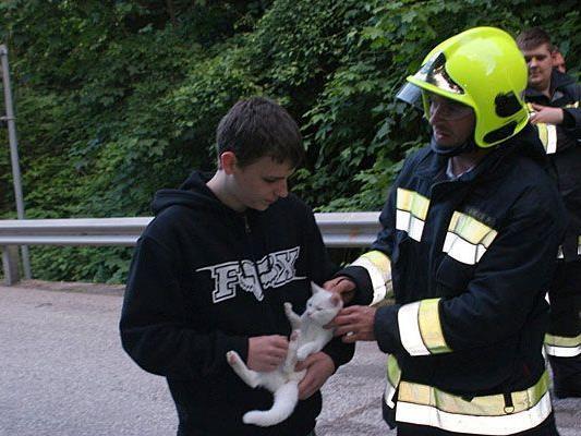 """Katze """"Julie"""" konnte nach der Rettung vom Baum in Payerbach ihrem Besitzer übergeben"""