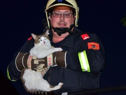 Freiwillige Feuerwehr Neunkirchen Stadt rettet Katze von Baum
