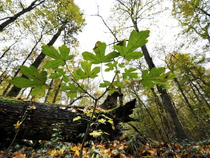 Fall entfachte Debatte zur Praxis der elektronischen Waldüberwachung.