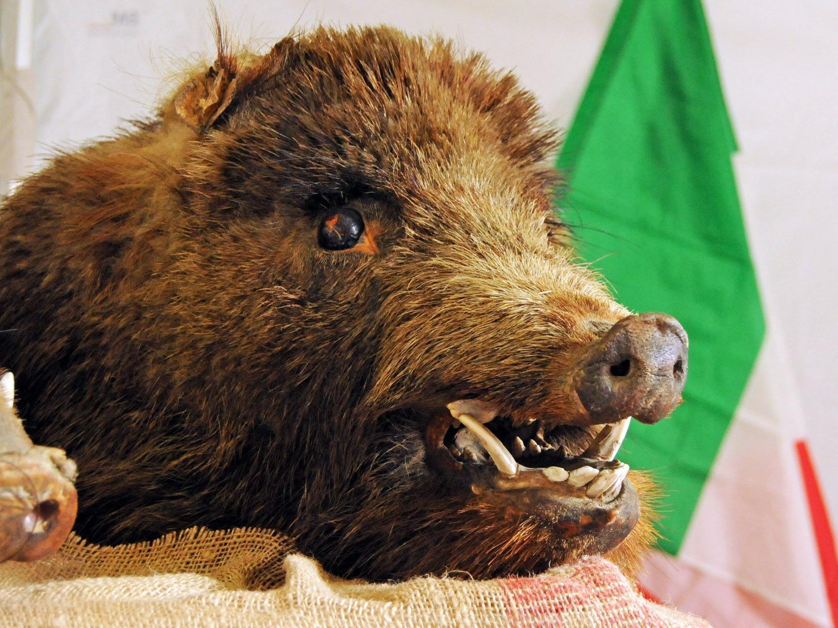 Feines vom Wildschwein beim italienischen Markt in Hard