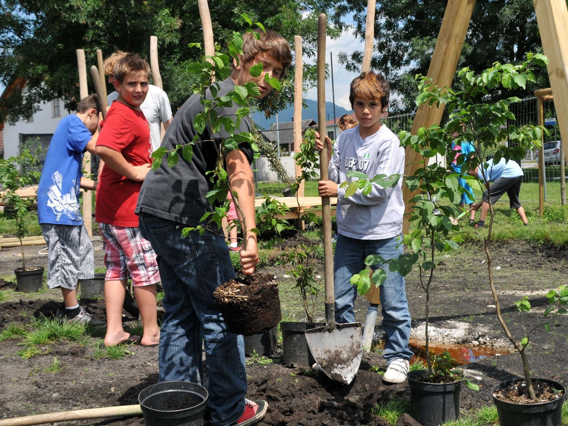 Harder Schülerinnen und Schüler bei Pflanzen der Büsche auf dem Spielplatz im Erlach.