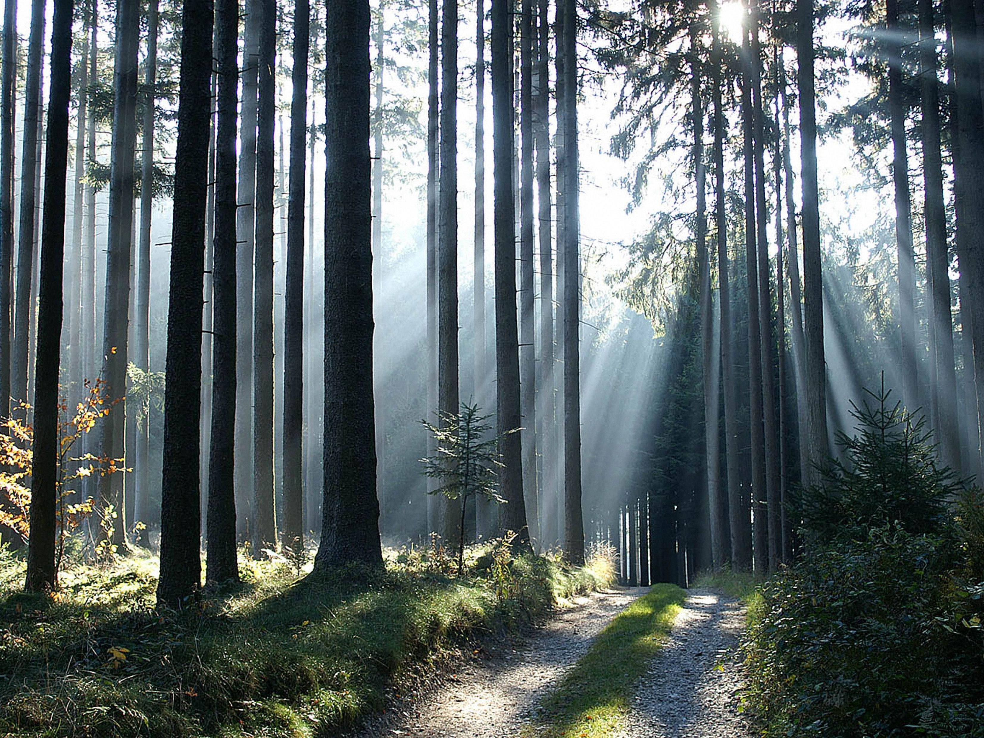 LR Schwärzler: Auszeichnung für verantwortungsvolle Waldwirtschaft