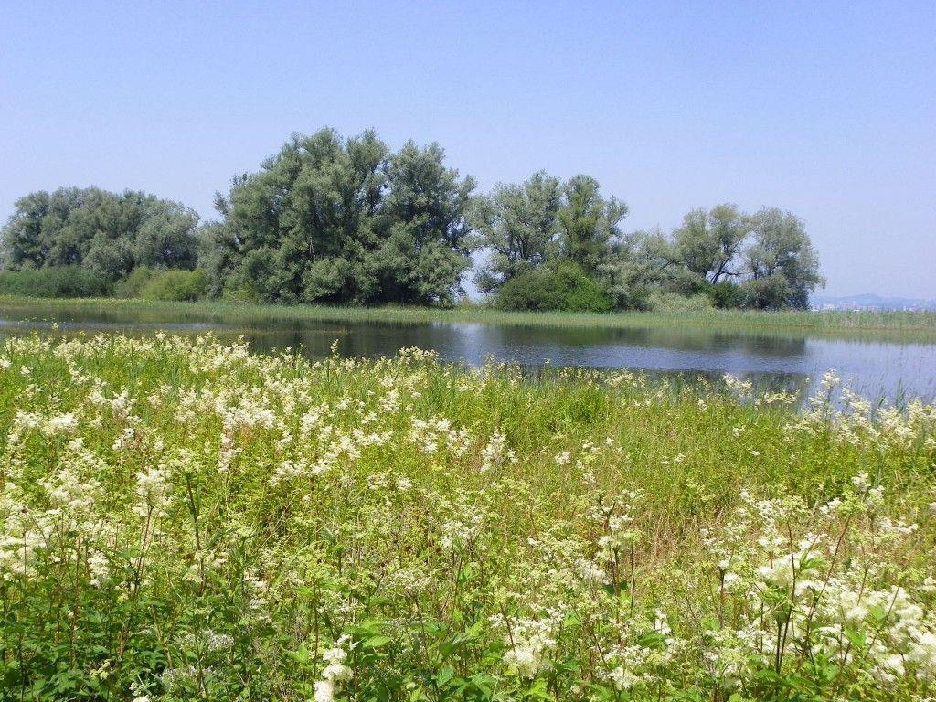 Bodensee tritt über die Ufer