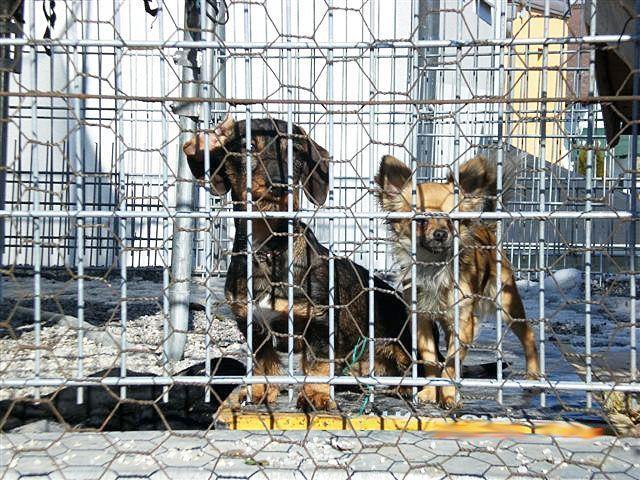 Im Frühjahr wurden diese Hunde abgelichtet, die unter widrigen Bedingungen in einem Zwinger gehalten werden.
