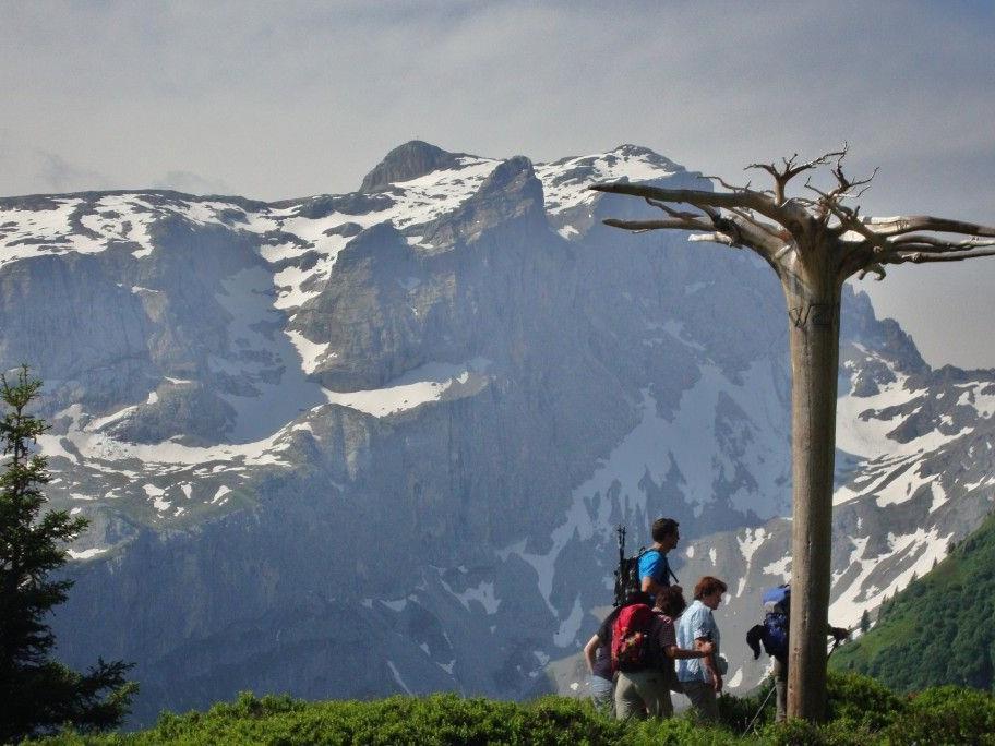 """Der """"Mythenbaum"""" symbolisiert die Anderswelt."""
