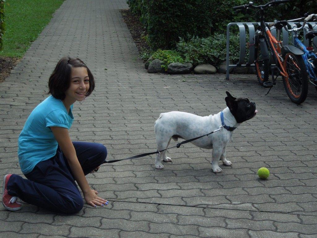 Auch Dornbirn soll hundefreundlicher werden.