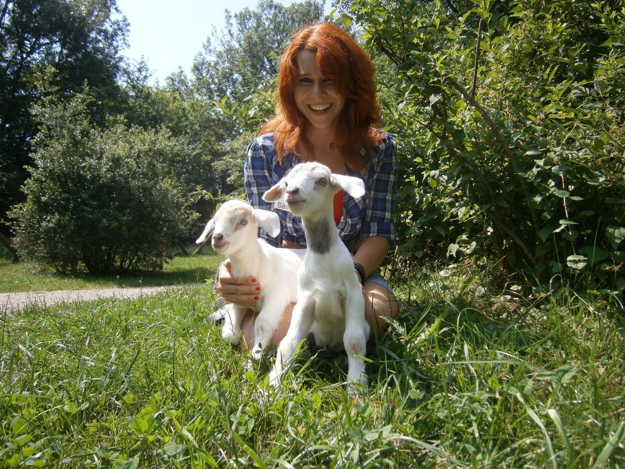 So süß sind die Baby-Ziegen Max und Moritz am Cobenzl