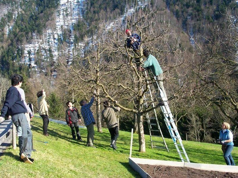 Baumschnittkurse gehören beim OGV Fraxern fix zum angebotenen Programm.