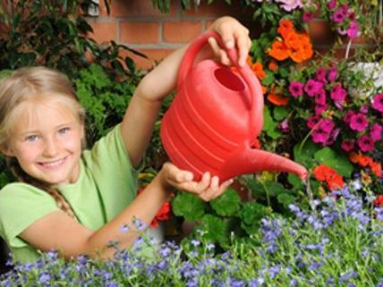 Nur wer regelmäßig gießt hat beim Blumenwettbewerb eine Chance.