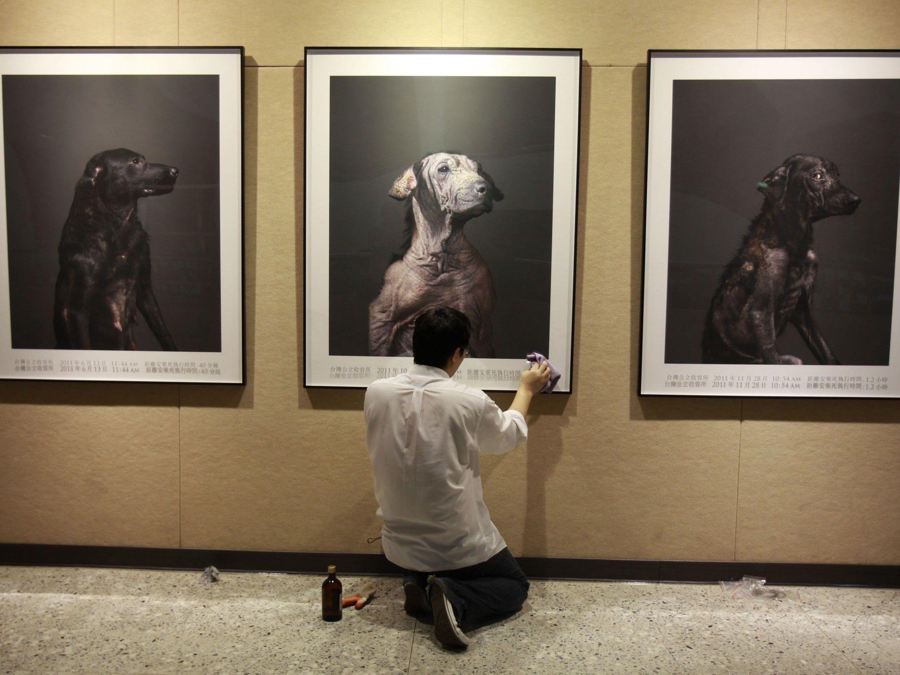 Tou Chih-Kang hält in den Fotos die letzten Minuten der Hunde fest.